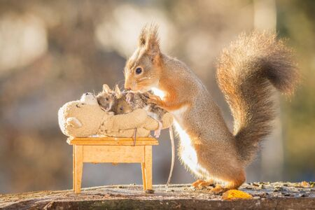 mouse: red squirrel with mouses on a bear Stock Photo