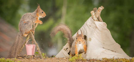 red squirrel in  tent with a fire place and squirrel on it