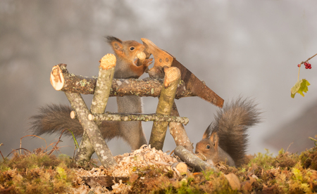 red squirrel standing with a saw with another squirrel beneath
