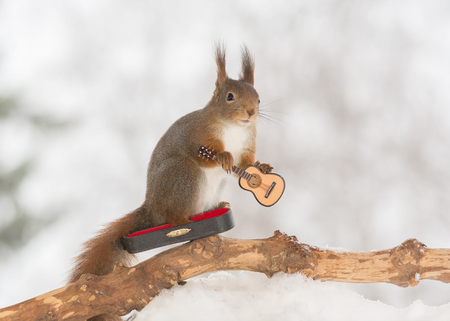 red squirrel in snow with guitar Stock Photo