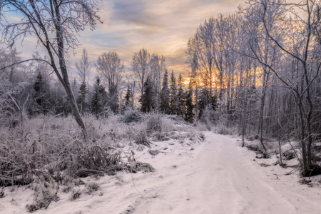 trees with ice and snow in a forest , winter, mountain landscape