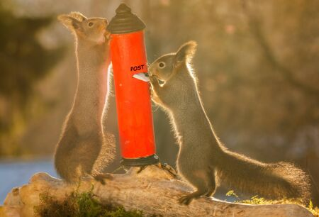 red squirrels standing with a letterbox and letter