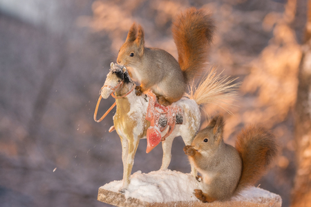 red squirrels standing on a horse and another watching from behind Stock Photo