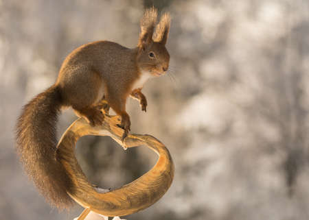 red squirrel standing on a heart of wood