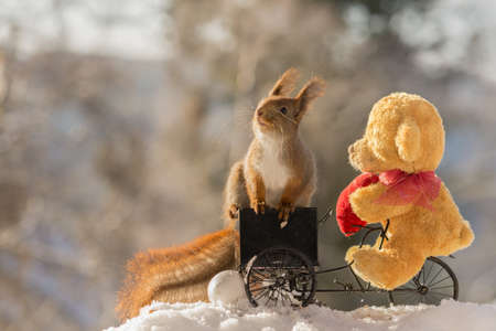 close up of red squirrel on a cycle with a bear