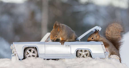 close up of red squirrels in and behind  a car with snow and eggs in back