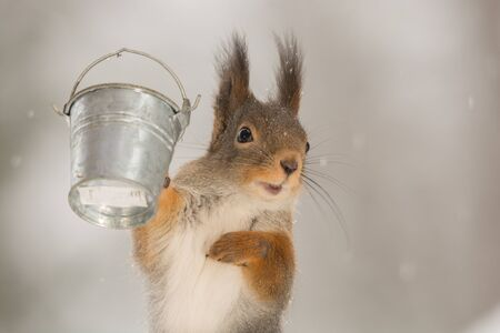 close up of red squirrel looking at the viewer with a bucket in hands Stock Photo
