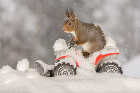 close up of red squirrel on a car with snow and eggs in front