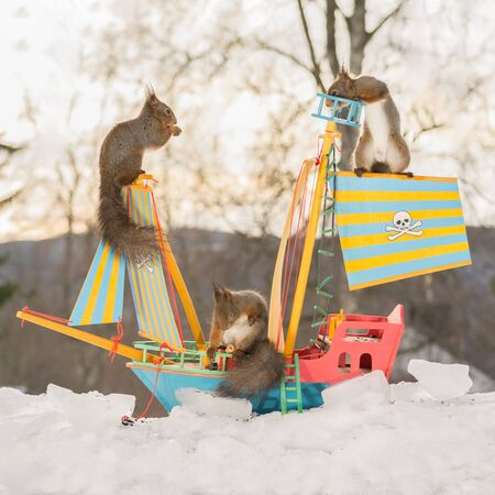 red squirrels on a pirate ship in the snow