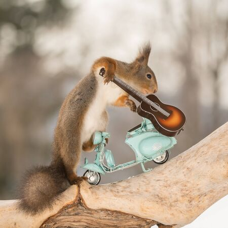 close up of red squirrel on a motor cycle and a guitar