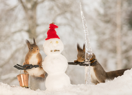 running nose: red squirrels standing with and on snowman structures with bucket and icicle