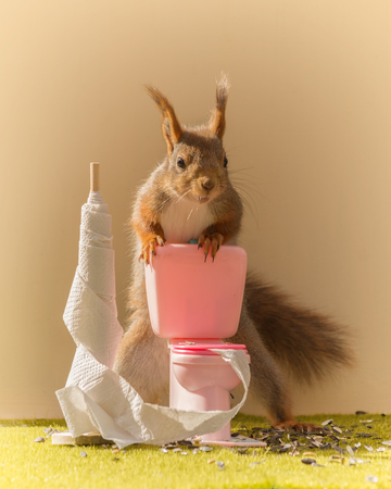 close up of red squirrel on a toilet with toilet paper looking at the viewer