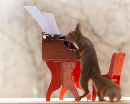 red squirrel standing with a table and typewriter reading text on paper