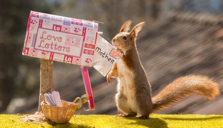 red squirrel holding a letter with words mother Stock Photo