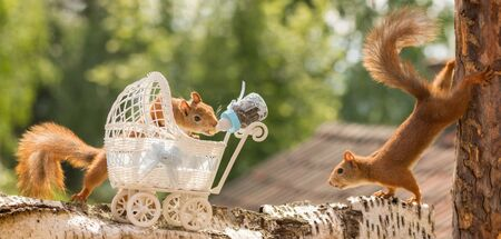 red squirrel with a pram  holding a nursing bottle with another watching