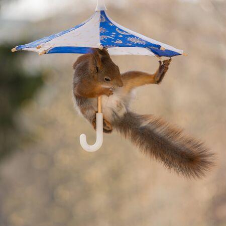 Nett Eichhörnchen Snare Draht Bilder - Der Schaltplan - greigo.com