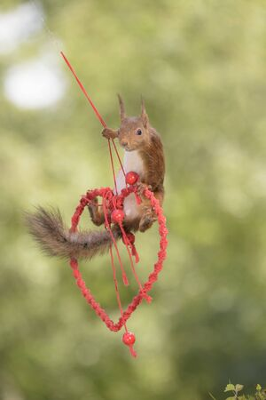 red squirrel swinging on a heart in the air Stock Photo