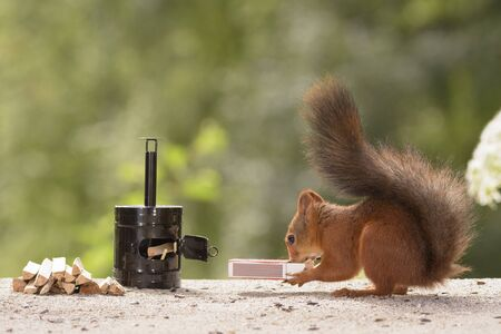 red squirrel holding a Matchbox standing with a stove Stock Photo