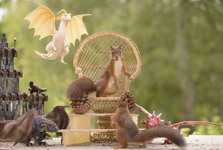 red squirrels standing on a Armchair with dragons surrounded