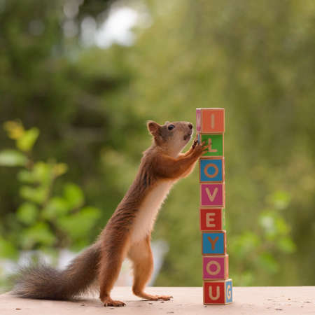 red squirrel with  blocks with the words i love you