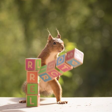 squirrel with falling blocks with the word squirrel Stock Photo