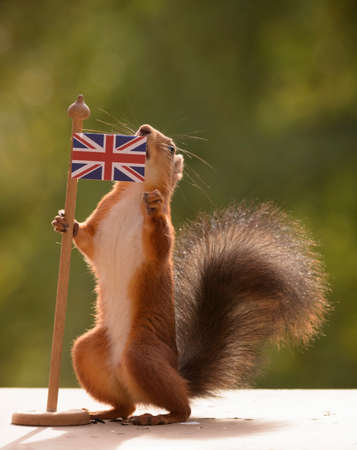red squirrel  is holding a Brittish Flag Stock Photo
