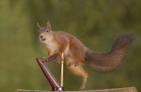 red squirrel is jumping on a harp