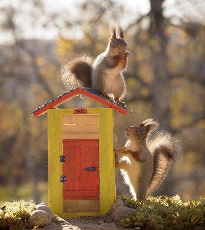 residential construction: red squirrels are standing with an out house