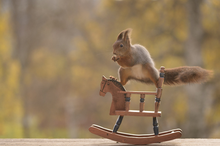 red squirrel is standing in split on a Swing horse Stock Photo