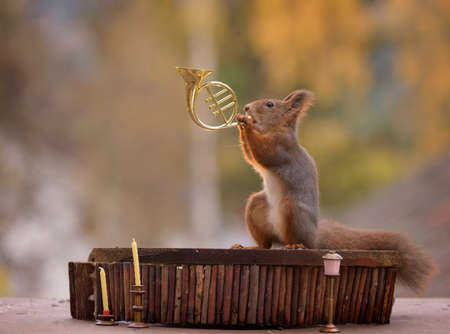 red squirrel is playing a french horn Stock Photo