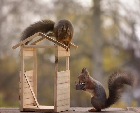two red squirrels are building a toilet