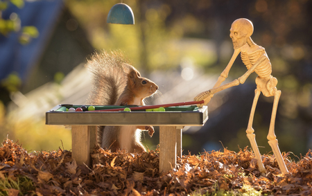 red squirrel with an skeleton att a pool table Stock Photo
