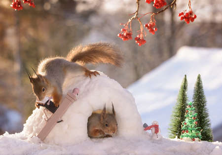 red squirrels in a igloo and with a letterbox  Stock Photo