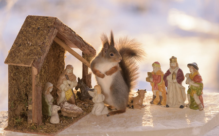 red squirrel in a Nativity Scene on ice