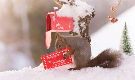 Red squirrel is holding a christmas santa letter