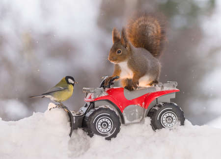 Red squirrel and great tit with a Quadbike and snowplough  Stock Photo