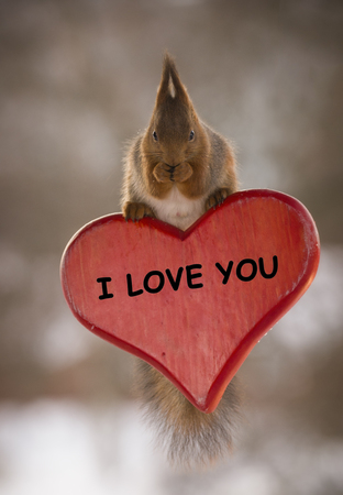 red squirrel on an I love you heart