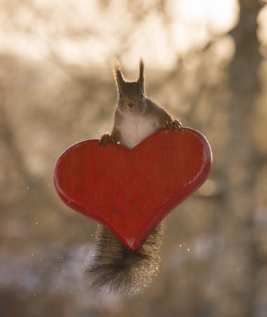 red squirrel climbing on an red heart  Stock Photo