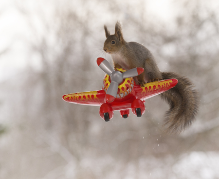 red squirrel is standing on a plane