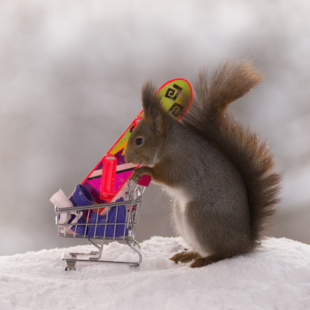red squirrel stands with a shopping cart with winter sport articles Stock Photo