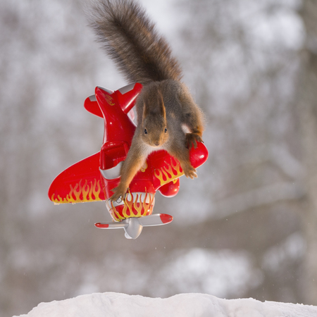 red squirrel is standing on a airplane Stock Photo