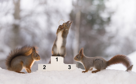 red squirrel stands on a podium  with a medal Stock Photo