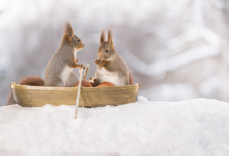 two Red squirrels are sitting in an rowing boat