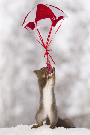 Red squirrel with a bag and a parachute