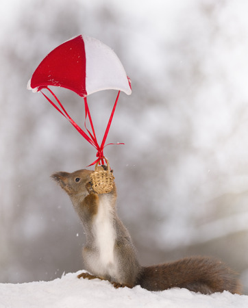 Red squirrel with an basket on a parachute