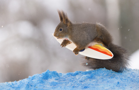 red squirrel is holding on to an  surfboard