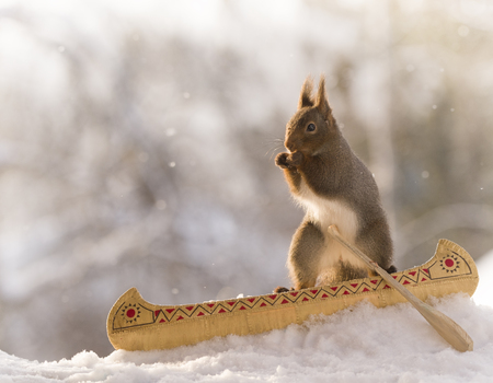 Red squirrel is sitting in a canoe