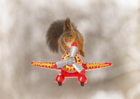 red squirrel is flying  a plane