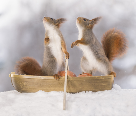 two Red squirrels with an oar in a rowing boat