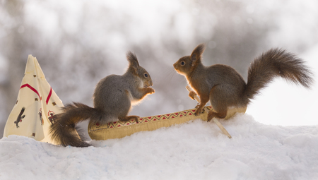 two Red squirrels sitting in a canoe